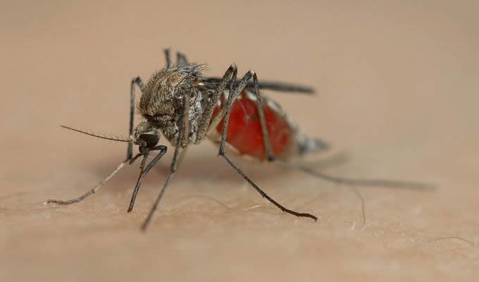 Mücken Klimaanlage mückenschutz